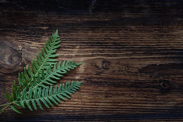 kapradina na dřevě